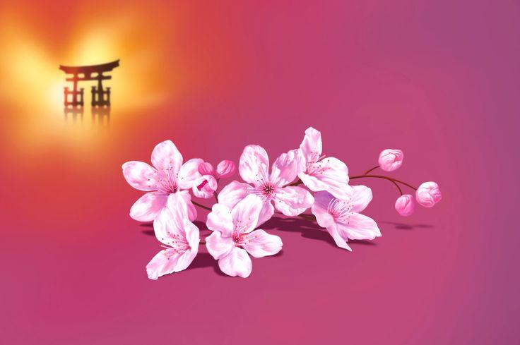 Fleurs de cerisier - illustration patrickclouet.com