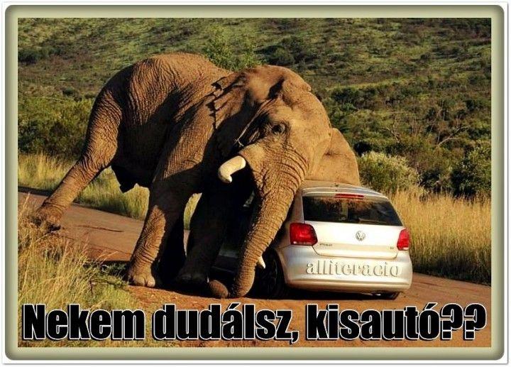 vicces, állatos, képek, humor, aranyos, cuki, elefánt, kisautó,