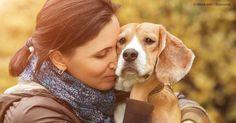 Los investigadores han descubrieron que los perros muestran comportamiento sumiso y tienden a acercarse a una persona que está llorando que a una que habla. http://mascotas.mercola.com/sitios/mascotas/archivo/2015/12/13/comportamiento-sumiso-canino.aspx