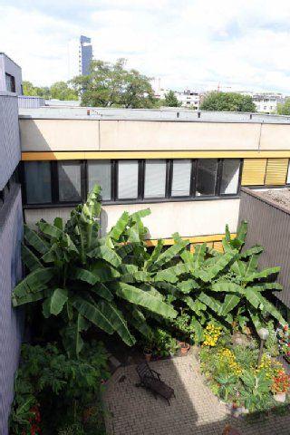 Cool Fachhochschule in Deutz Bananenstauden wachsen fast wie in einem botanischen Garten K ln K lnische