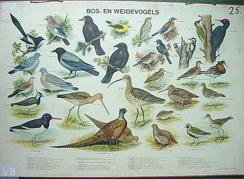 ONDERWIJSGESCHIEDENIS een kaart van de bos en Weidevogels