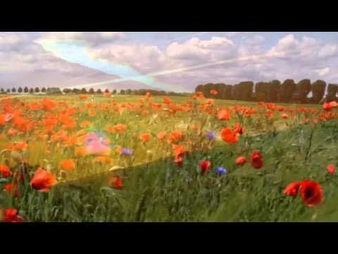 ▶ Remembrance day video - YouTube