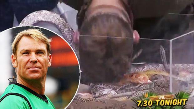 Australian Cricketer Shane Warne Bitten By Snake On Head During Live Tv Show