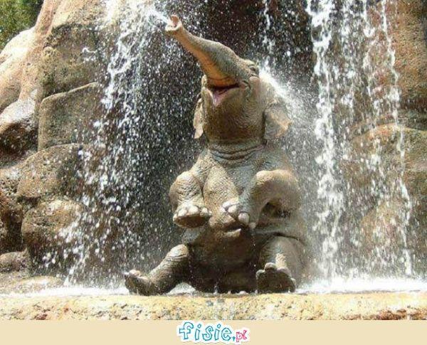 Malutki słonik