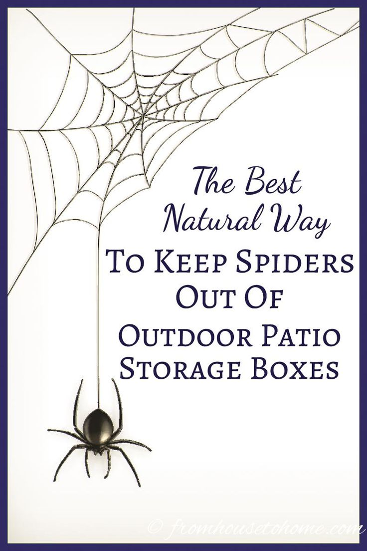 The Best Natural Way To Keep Spiders Out Of Outdoor Patio Storage Boxes   This is a great natural way to keep spiders (and other critters) out of your outdoor patio storage boxes without using pesticides or other harmful chemicals. It's so easy, I'm going to try it in my shed, too.