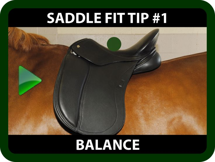 Schleese Saddle Fit Tip #1 - Balance Are you struggling with your position? Is your horse lacking in its performance?  You may be faced with a Saddle Balance issue. Watch this informative video for some saddle fit tips on Balance that may help you!   https://youtu.be/U2mKz0uP_K8?list=PLA35A02DBF310BB9D