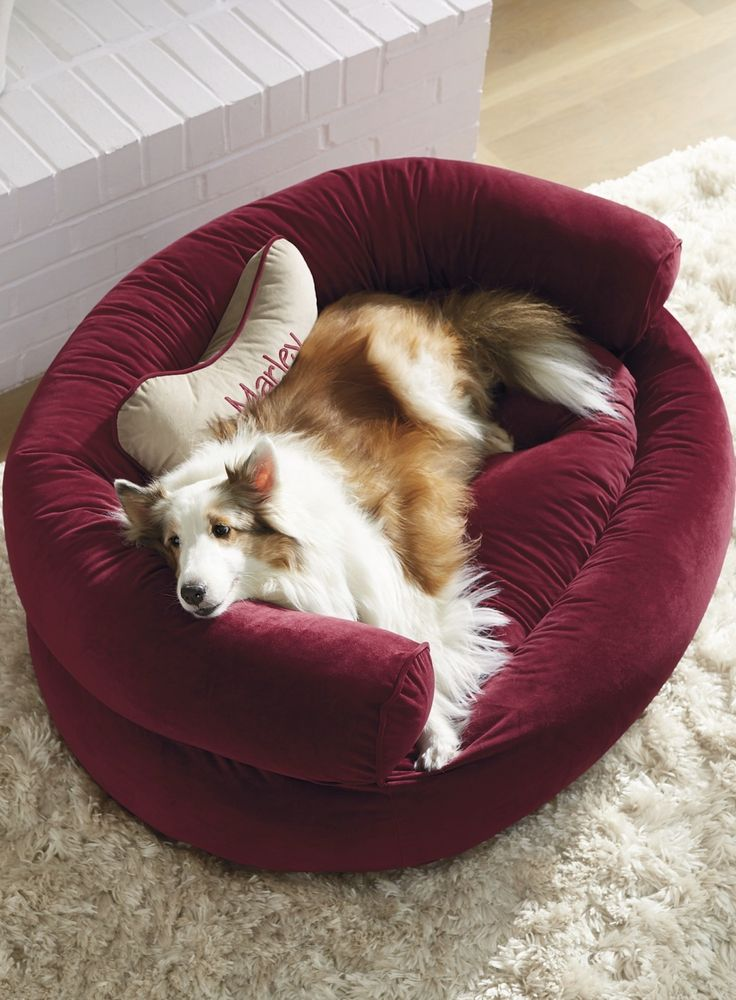607 Best Images About Pampered Pets On Pinterest Leather