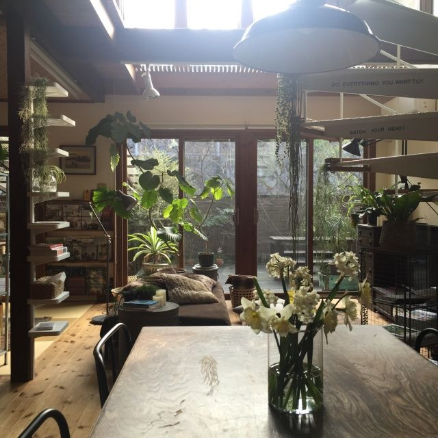 yururi-8239223さんの、Overview,IKEA,ダイニングテーブル,ウンベラータ,朝,水仙,いなざうるす屋さん,加工なし,花のある暮らし,NO GREEN NO LIFE,いなざうるす屋さんニコアンドについての部屋写真