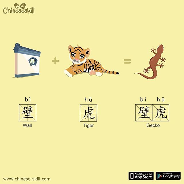 """In Chinese a Gecko is a """"Wall Tiger."""" 墙壁 qiángbì = Wall  Important note: 墙 qiáng is a more commonly used word for wall, but 壁 bì  also means wall. You will normally see 壁 together with 墙."""