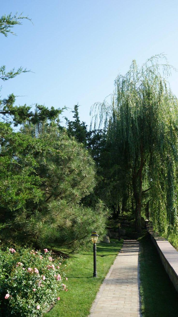 Высадка крупномерных деревьев — одно из пожеланий заказчицы. Специалисты Укр Ландшафт Парка подобрали самые удачные для киевского климата сорта.