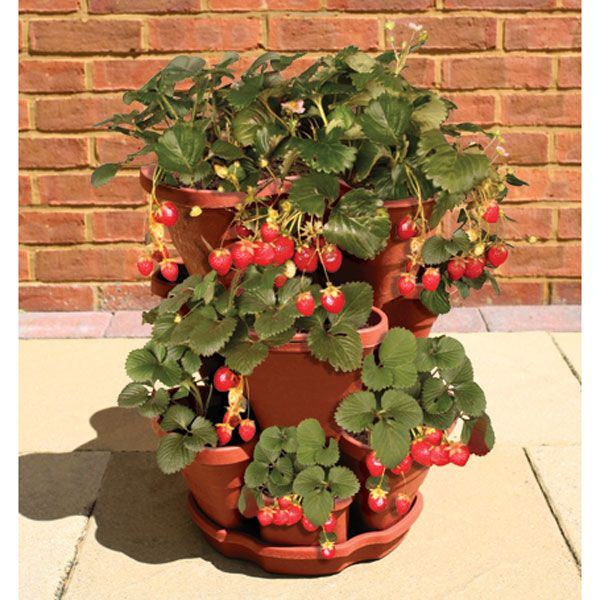Growing Strawberries In A Planter: Strawberry Pot...a Must Have For My Ever Growing