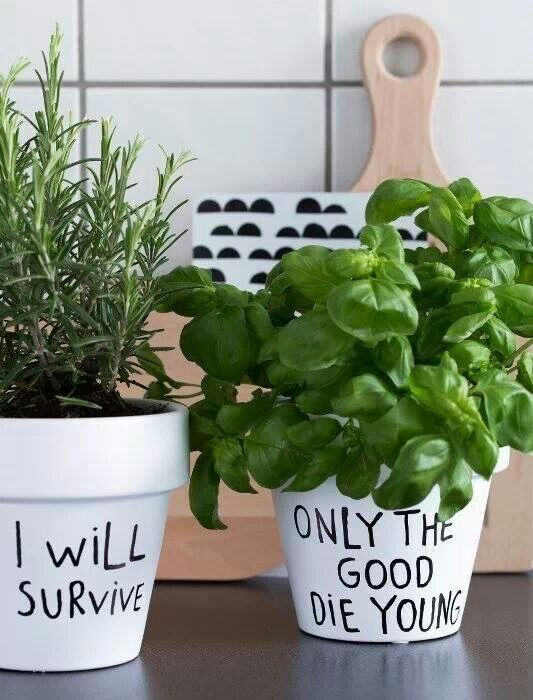 Pots with sayings