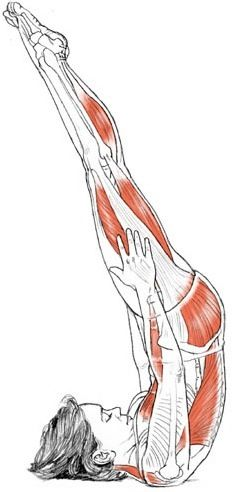 Shoulder Stand Pose (Niralamba Sarvangasana) Deconstructed  #Yoga #Anatomy