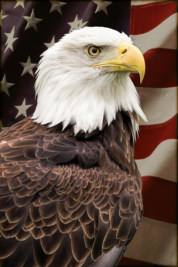 American Freedom Photograph