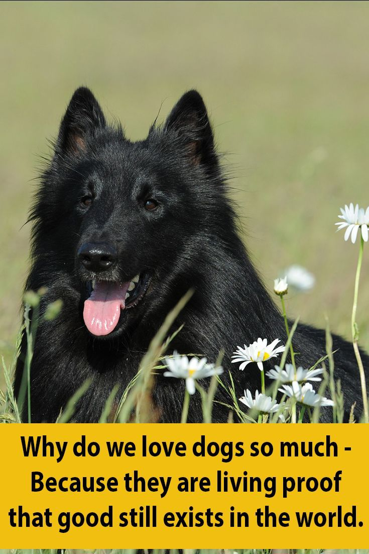 27 Beautiful Dog Quotes – Some Touching, Some Poignant