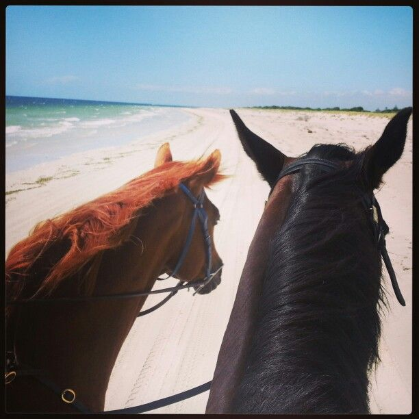 What an awesome ride along Pinks Beach, Kingston SE. www.for-the-love-of-horses.com #beachride #Kingston #horseriding