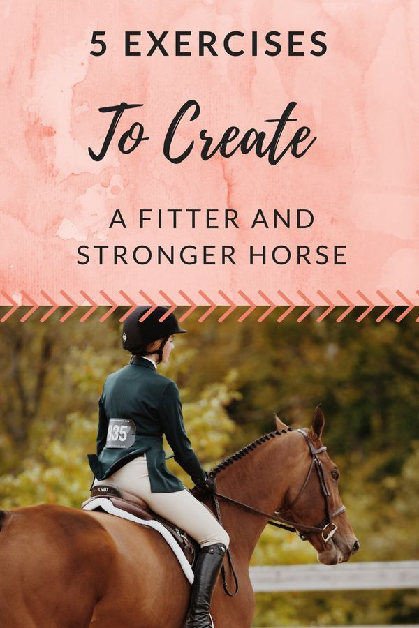 5 Exercises To Create a Fitter And Stronger Horse | Gg