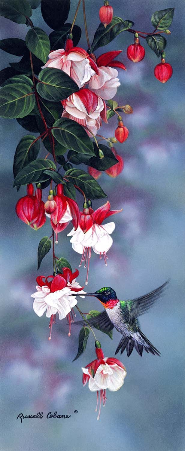 Hummingbird and fuchsia flowers - bird painting by Russell Cobane