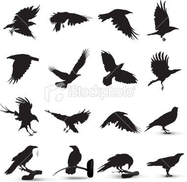 Raven Silhouette Royalty Free Stock Vector Art Illustration