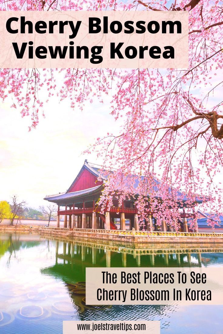 Where To See Cherry Blossoms In Korea Korea Travel Time In Korea World Travel Guide