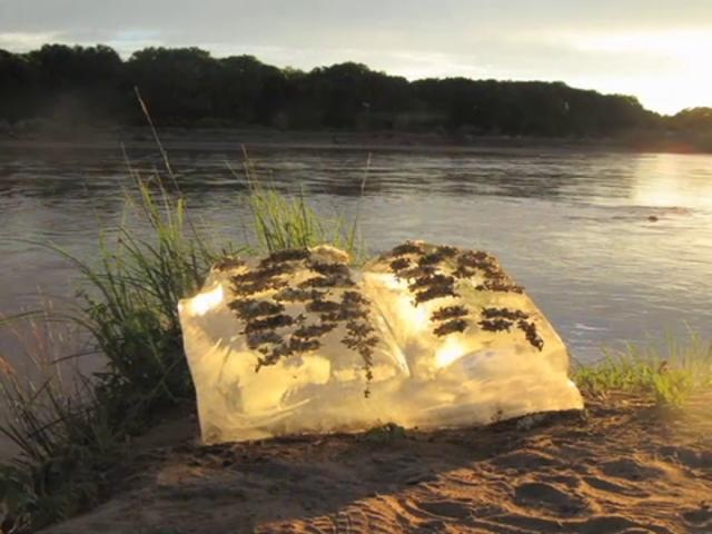 """Books of Ice, by Basia Irland by Orion Magazine. Photos from Basia Irland's ice sculpture project, which raises awareness about the health of our waterways by identifying plants that are native to certain rivers, freezing seeds of these plants in water from these rivers, carving """"books"""" out of the resulting ice, and then releasing them back into the rivers with the support of local students and community members."""