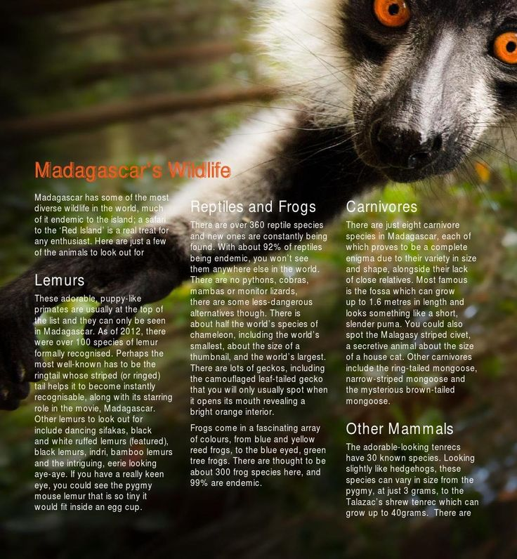 #ClippedOnIssuu from The Complete Guide to Madagascar