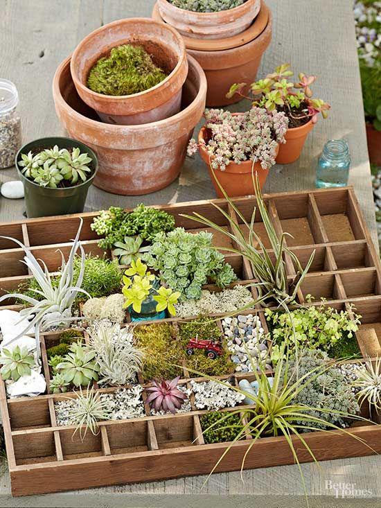 102 best images about indoor plants on pinterest green for Indoor mini garden ideas