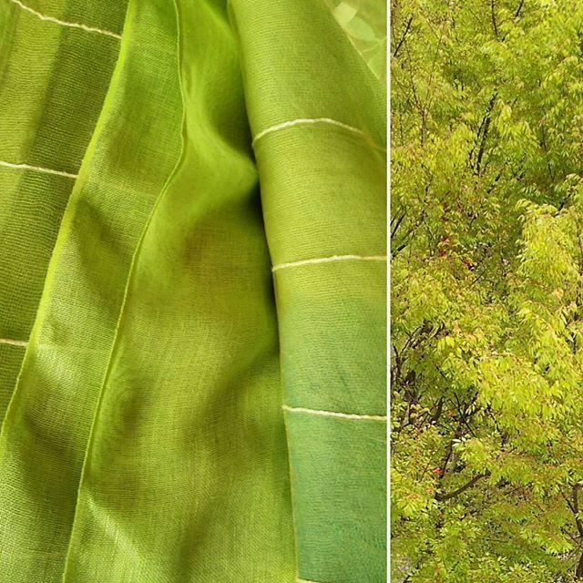 昨日は黄色と青を混ぜて明るい緑の染め物しました 最近見た色と思ってたらケヤキの若葉色と同じ