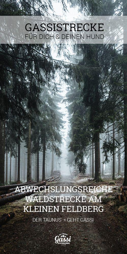 Unterwegs mit Hund - deine schönsten Gassistrecken im Hochtaunus auf dem kleinen Feldberg.