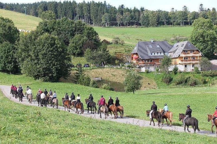 Islandpferdegestüt Scherzingerhof | Hochschwarzwald Tourismus GmbH