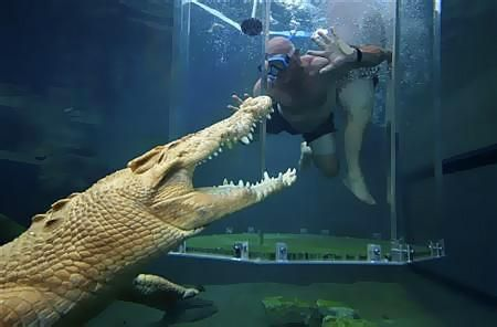A thrill-seeker tourist dives in a cage partially immersed in a crocodile pen in Crocosaurus Cove in Darwin August 28, 2008. Photo: REUTERS/Wade Huffman