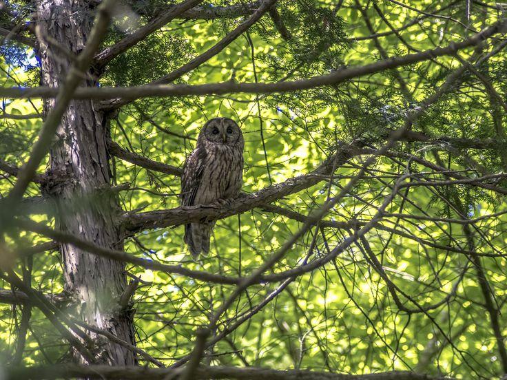 Přečtěte si téměř detektivní příběh, ve kterém se snažíme vysvětlit zvuky v lese, které nám popsal dopisovatel.
