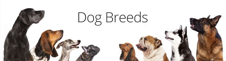Petland Carriage Place in Columbus, Ohio would love for you to check out our dog breed information and choose what breed is best for you and your family!