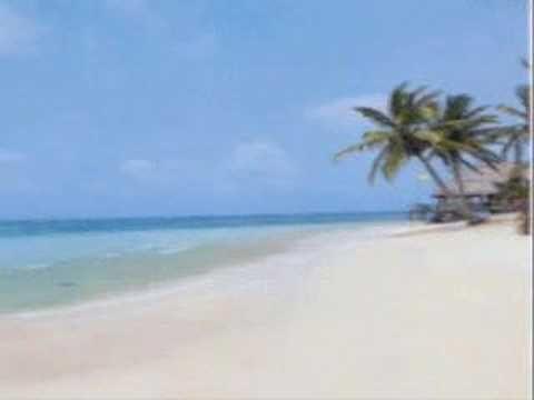 The Kooks Seaside