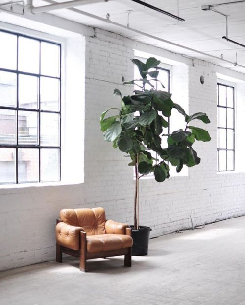 studio space with leather armchair and fiddle leaf fig plant