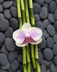 Macro of orchid and thin bamboo grove on stones