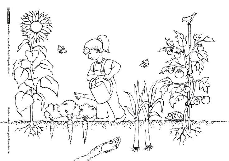 Download als PDF:Natur – Garten Gartenarbeit Gemüse