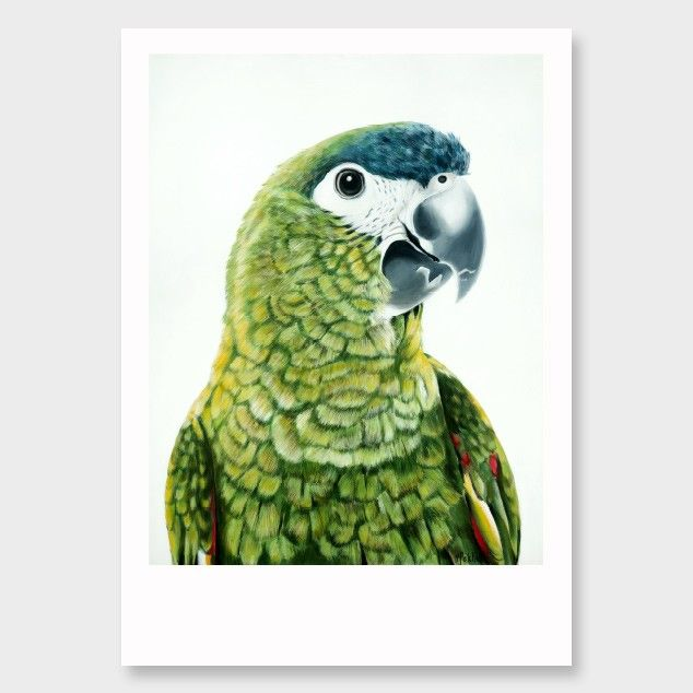 'Clarence' Hahn's Macaw Art Print by Margaret Petchell