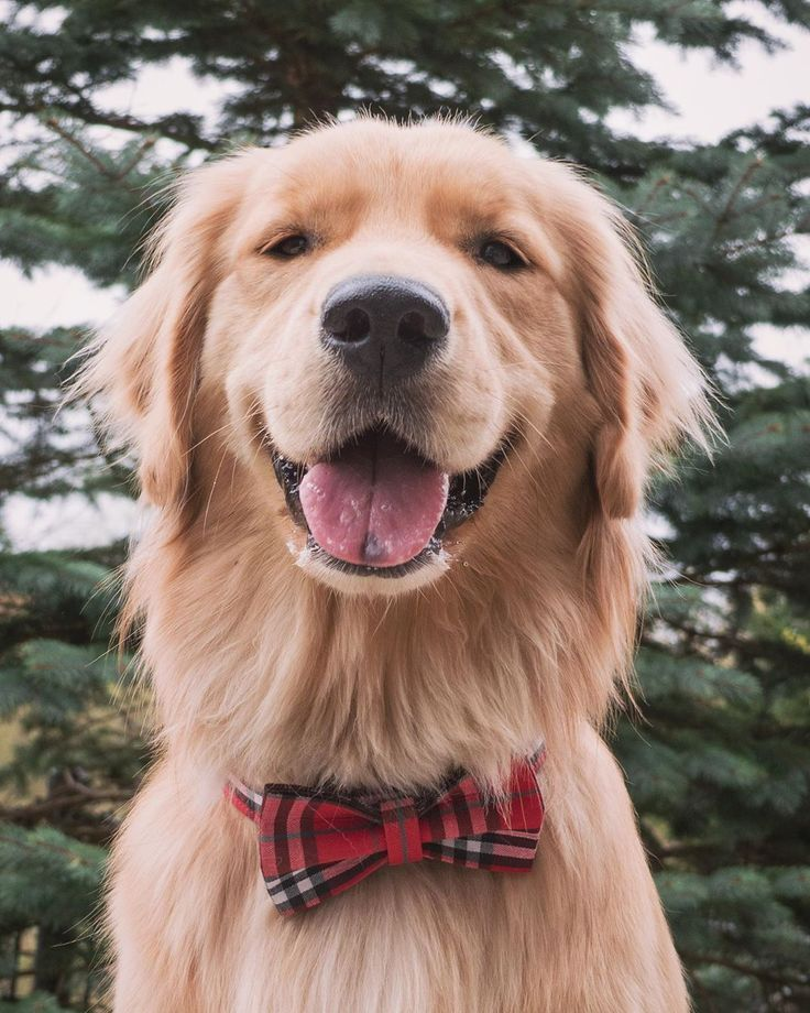 Autumn On Instagram Goldenretriever Red Retriever Puppy