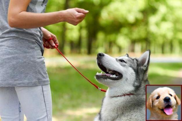 Dog Behavior Training School And Clicker Training Dogs Pulling