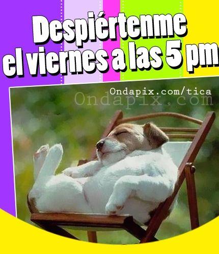 Despiértenme el viernes a las 5 PM #actitud #humor #viernes #tarjetitas #ondapix