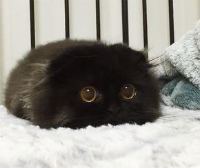 Gimo, il gatto con gli occhi più grandi del mondo