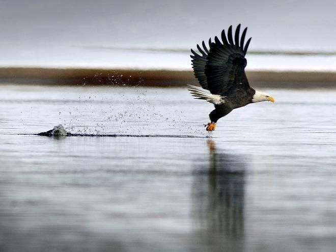 46 Best Eagle Viewing Images On Pinterest