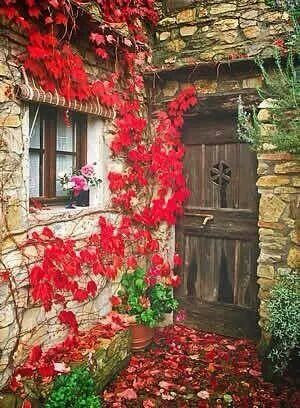 Flowers and this door ...