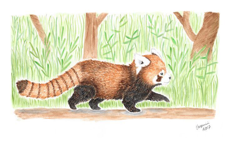 Red panda aquarelle by Valpuri
