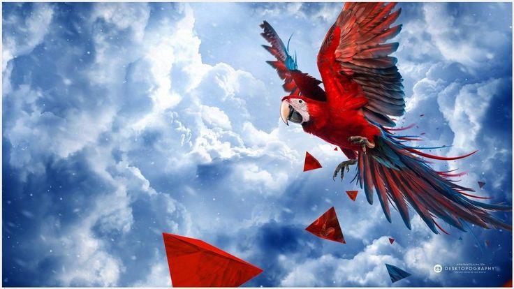 Scarlet Macaw Bird Wallpaper   scarlet macaw bird wallpaper 1080p, scarlet macaw bird wallpaper desktop, scarlet macaw bird wallpaper hd, scarlet macaw bird wallpaper iphone