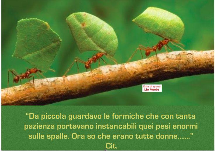 http://www.lioverde.com/ http://www.lioverde.com/#!proprieta-lio-verde/c17ol