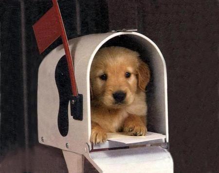 Puppy in mailbox!!!!