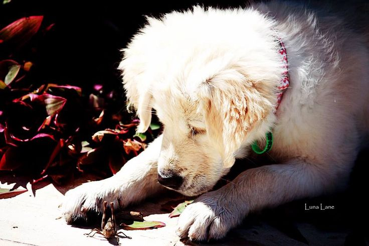 Enchanted by a grasshopper! Puppy curiosity