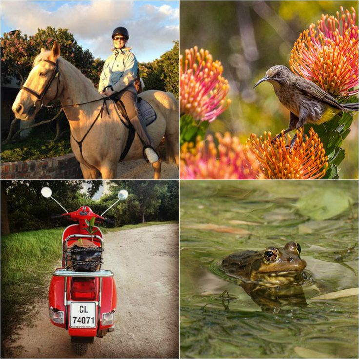 Who needs professional photographers when we have guests like these? #GrootbosMoments | Grootbos
